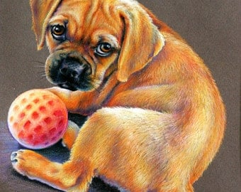 Puppy With Ball - Portrait in Colored Pencil
