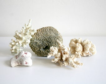 Coral Reef Specimen Collection
