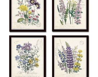 French Botanical Collage Print Set No. 2, Botanical, Print Set, Wall Art, Giclee, Prints, Vintage Botanical, Flower Prints, French Style Art