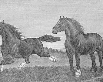 Horses drawing printable vintage illustration, digital download