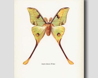 "Bohemian Decor ""Moon Moth"" Vintage Yellow Butterfly Art Print No. 28-2"