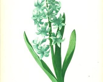 1986 Vintage Blue hyacinth poster Blue Botanical art Blue flower poster Gardener gift botanist Blue floral print Redoute