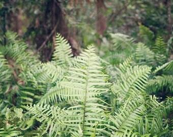 Rainforest Photography, Botanical Art, Botanical Photography, Jungalow, Jungle, Tropical Print, Home Decor, travel, nature wall art, green