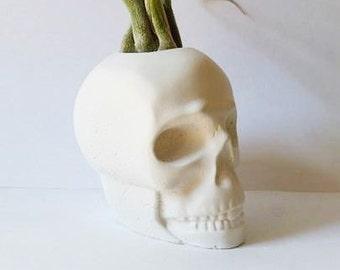 Mini skull planter,  Air plant holder, pirate, top hat skull