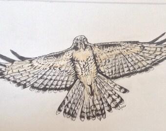 Hawk Illustration - Ink Illustration - Red Tailed Hawk - Bird Illustration - Colored Pencil Sketch - Biological Illustration