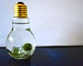 Marimo Moss Ball Light Bulb Aquariums - Japanese Nano Moss Balls in Lightbulb Glass Vase Terrariums - Sea Glass Grean