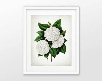 Japanese Snowball Flower Art Print - White Flower Art Print - Viburnum Plicatum - Botanical Print - Single Print #1609 - INSTANT DOWNLOAD