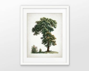 Oak Tree Art Print - Oak Tree Illustration - Woodland Tree Art - Oak Leaf - Acorn - Oak Tree Decor - Single Print #1717 - INSTANT DOWNLOAD