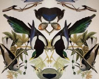 Strange Bird Audubon Collage: Four Western Corvids