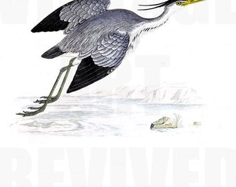 Heron Flying Graphic - High Resolution Digital Download No.706
