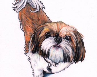 Shih Tzu art print, Shi Tzu giclee print from an original colour pencil drawing, wall art, Shi Tzu gifts, Shi Tzu art, for Shih Tzu lovers
