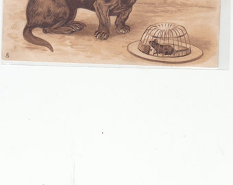 Chocolate Embossed Dachshund Dog 1905 Postcard, Dog Starring At Mouse In Trap,Tuck's