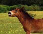 I love horsing around wit...