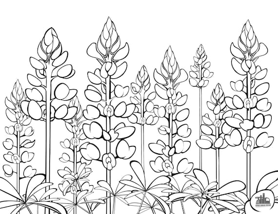 Bluebonnet Flower Coloring Page Beauteous Texas Bluebonnets Coloring Sheet