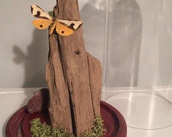 Mounted Salt Marsh Moth