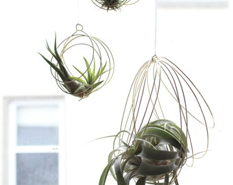Large Tillandsia Ornaments, air plant ornaments, air plant hangers, hanging plants, giant air plants, bromeliads, small tillandsia ornaments