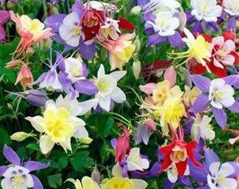 100 Columbine Mix Caerulea Seeds Perennial Flower