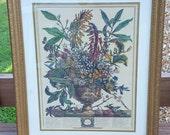 Vintage Botanical Framed Print 1970s
