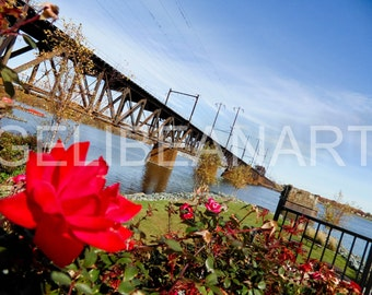 Limited Edition Bridges in Bloom Photo Print