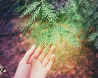 Redwood Love 35mm film photograph -digital download