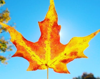 Yellow and Red Leaf. Instant download.