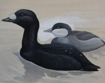 Original Painting, Original Art, Framed Art, Wildlife Art, Duck Painting, Duck Art, Wildlife painting, Canvas Painting, Canvas Art