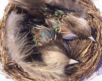 2 Birds In A Nest 4.4 Inches Scrapbooking Nest Craft Birds Small Birdsnest Bird Nest Craft Birds Nest Nr 6
