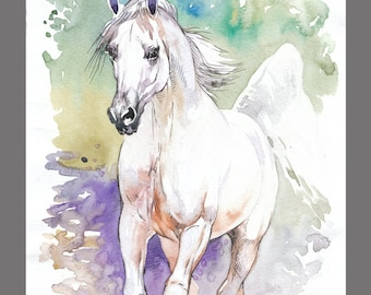 Wild White Horse painting 11.6×16.5 inches Art Print from the Original Watercolors Paintings