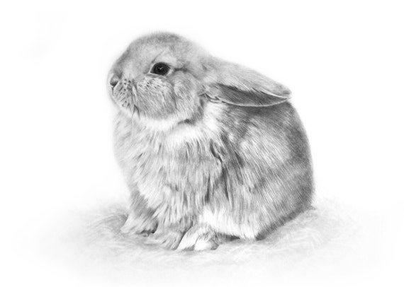 Signed Giclee Print Baby Bunny Pencil Drawing 16 X