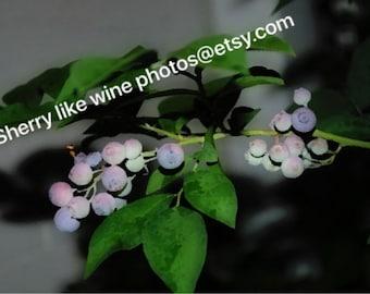 Summer Blueberries....................... photo art on enhanced matte paper