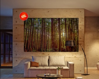 Redwood Forest Canvas Art Print Large Wall Home Interior Office
