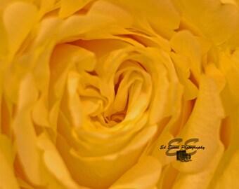 Yellow Flower - Macro