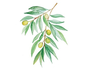Olive Branch Watercolour Print