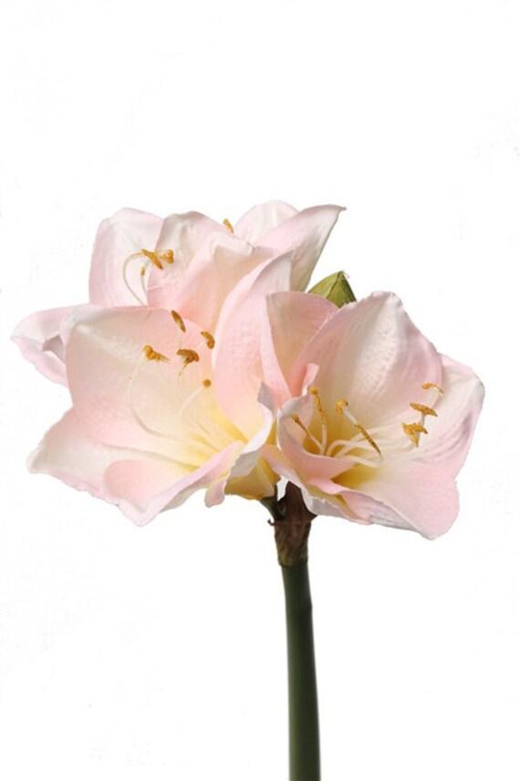Artificial Blush Pink Amaryllis Natural Color Peach