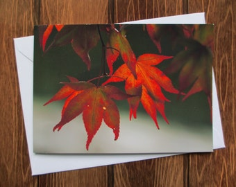 Flower Greetings card C5 - Maple Leaf