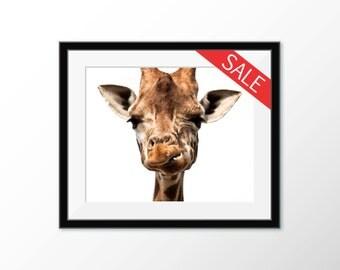Giraffe photography poster print. Wall art, animal photo, Giraffe's face & head. On sale!