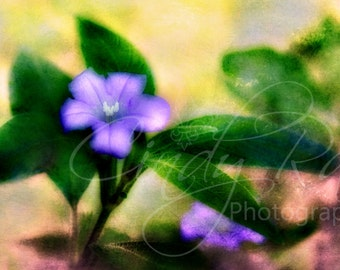 Flower, Photography, Print, Affordable, Under 10 Dollars, 8x10, Purple, Macro, Soft, Floral
