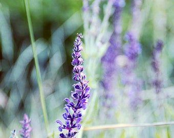 Floral photography Nature prints Living room art Purple photography Flower print Wildflowers photo download Country home decor digital L1