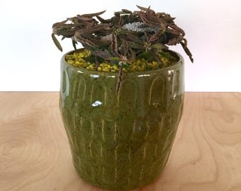 olive green geometric dash handmade ceramic planter pot for cactus and succulent plants