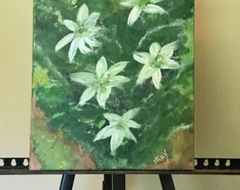 Jamaican Cactus in Bloom