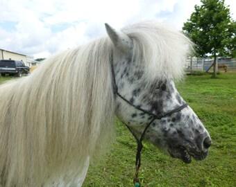"Miniature Horse ADULT Rope Halter 3/16"" rope, Mini Horse tack"