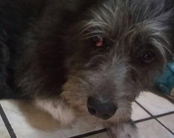 Help Chuchi !!! Eye surgery