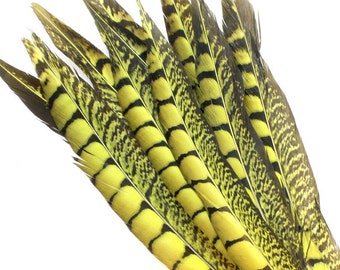 11-13 Inch Yellow Lady Amherst Feathers (5) Yellow Pheasant Feathers. Yellow Bird Feathers. Yellow Feathers. Yellow Colored Feathers.