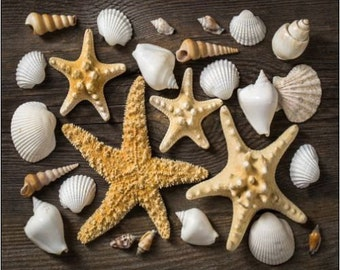 "2"" x 3"" Magnet Starfish and Shells for Decorations Magnet"