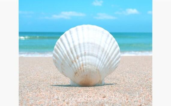 Beach Cottage Decor, Seashell Picture, Beach Wall Art, Seashell Art, Beach Decor, Beach Cottage Wall Art, Ocean Art, Beach, Seashell, Sand.