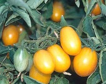 Cherry Tomato- Yellow Plum- heirloom- 70 day-INDETERMINATE- 25 seeds