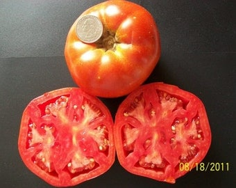 Heirloom Tomato- Thessaloniki- 68 day RED Indeterminate- 25 seeds