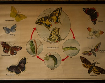 Vintage  Pull Down Chart  from Caterpillar  to Butterfly School Chart