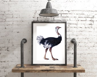 OSTRICH PRINT, Framed Wall Art, Free Shipping, Available in a Variety of Sizes and Styles, Ready to Hang, Create Your Own Gallery Wall