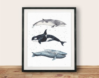 Buy One Get One, Minke Whale, Blue Whale, Orca, 8x10 or 11x14, Nautical Print, Whale Wall Art, Orca Print, Nautical Nursery, Whale Art Print